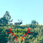 new mexico guided elk hunts - september 2021 archery elk we were hunting - TG's Trophy Hunts with Ty Goar